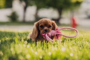 Dónde instalar césped artificial para mascotas