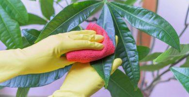 La importancia d lmipiar bien tus plantas.