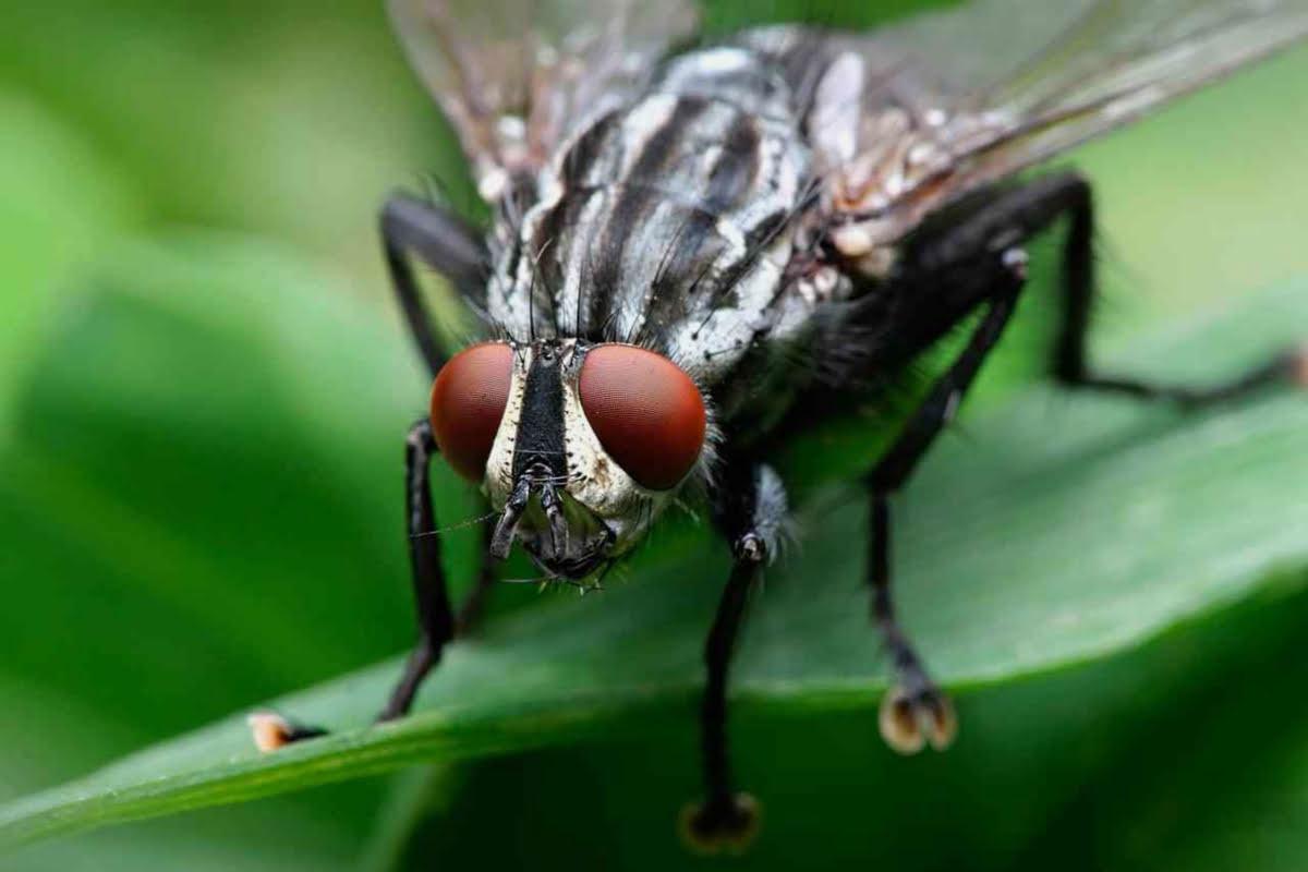 Elimina para siempre la mosca negra