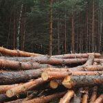 Cómo talar un árbol